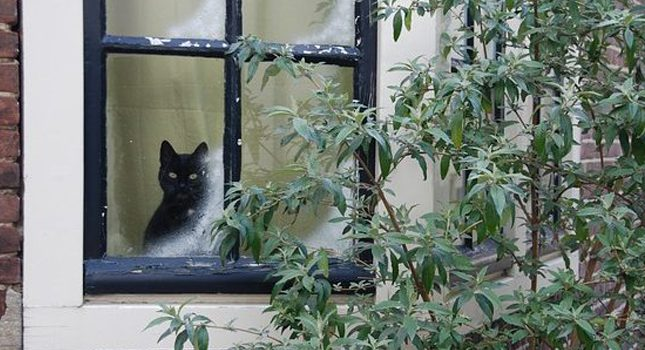 10 Tips to Keep your cat healthy and safe in winter