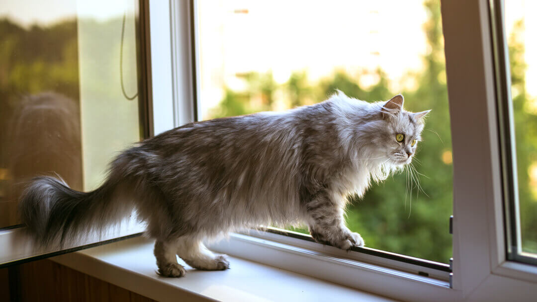 5 Ways to Stop Your Cat from Falling Out of a Window