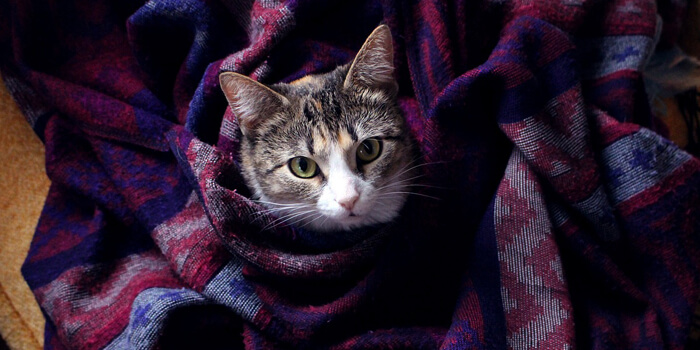 How To Take Care Of Your Cat During Cold?