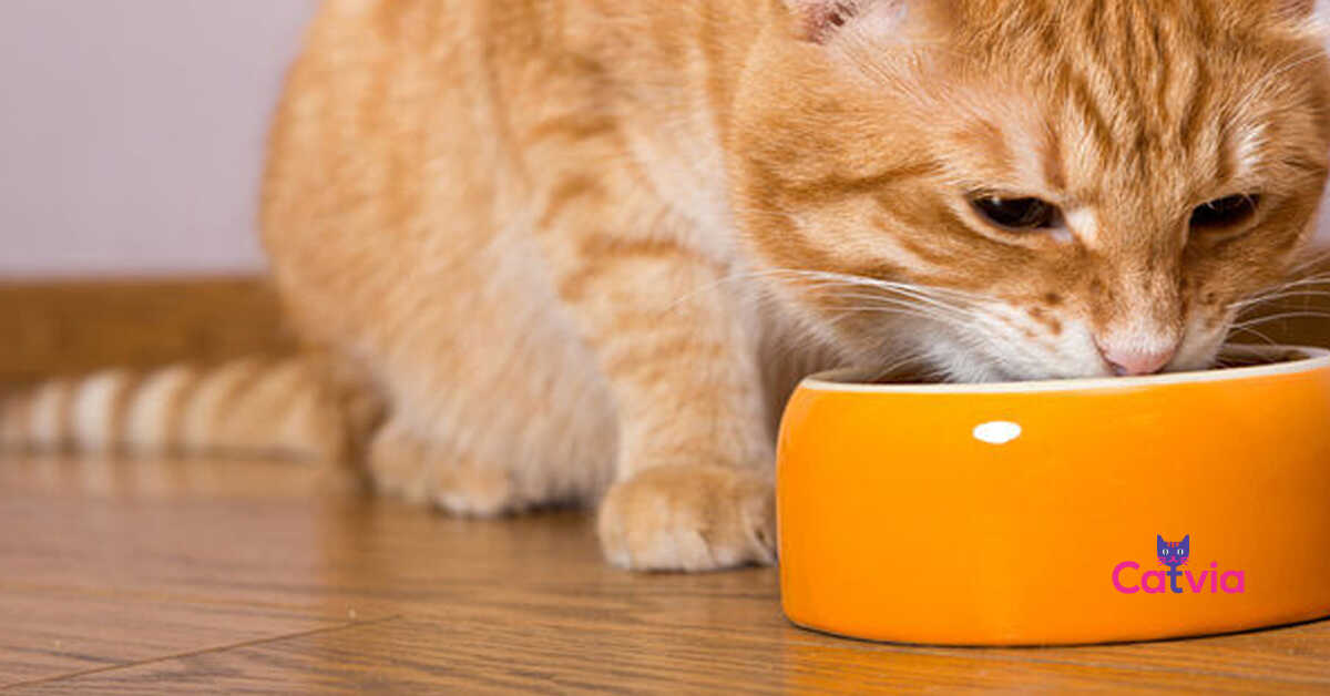 Best Healthy Natural Cat Food Review