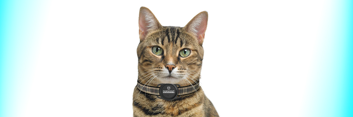 Pawscout Outdoor Tracker for felines