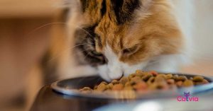 Best Kitten Food for Your Baby Cats