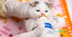 How much food does a kitten need