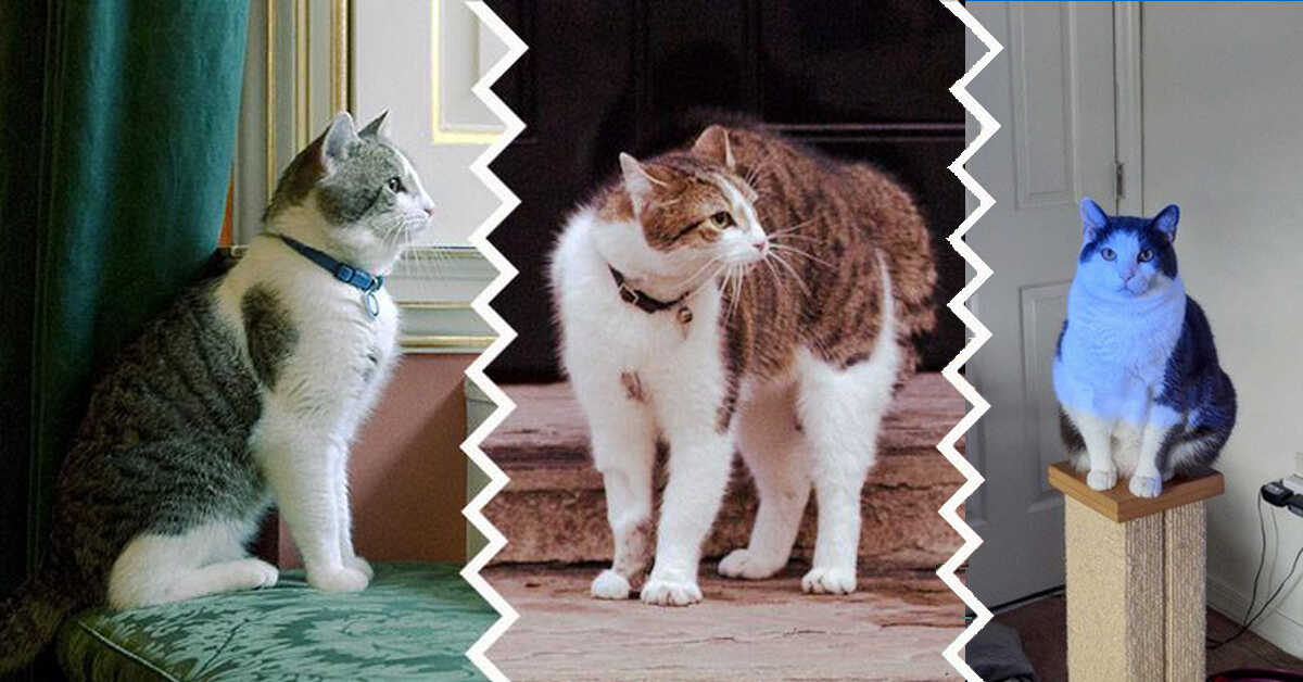 How to Help Your Overweight Cat Lose Weight