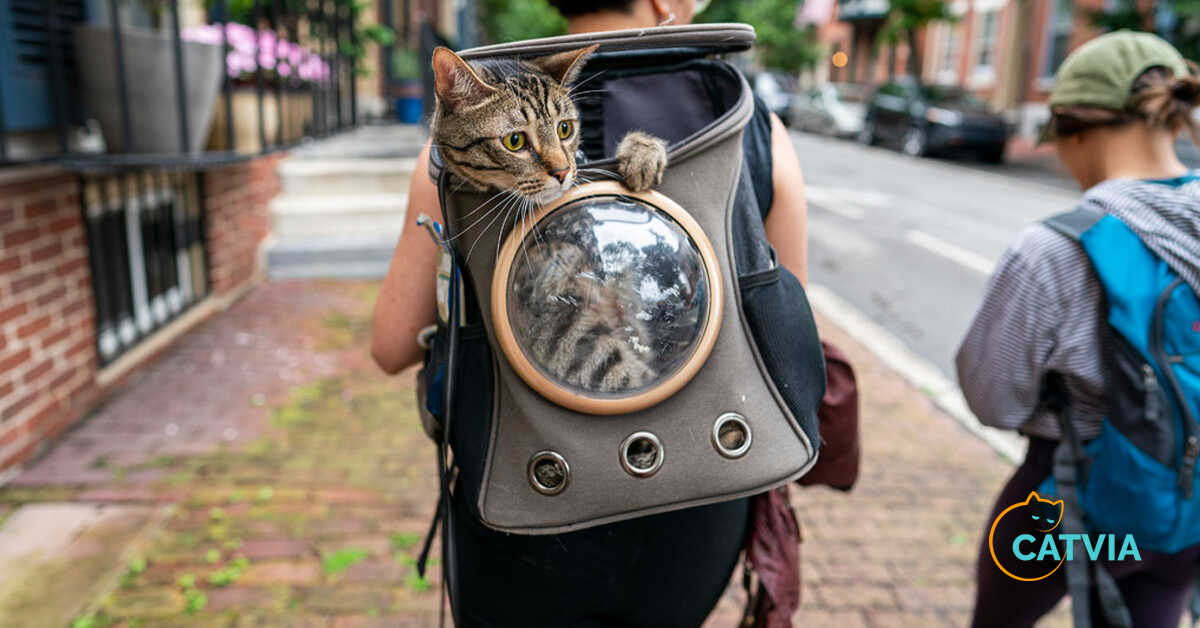 Cat Carrier Backpacks for your lovely pets