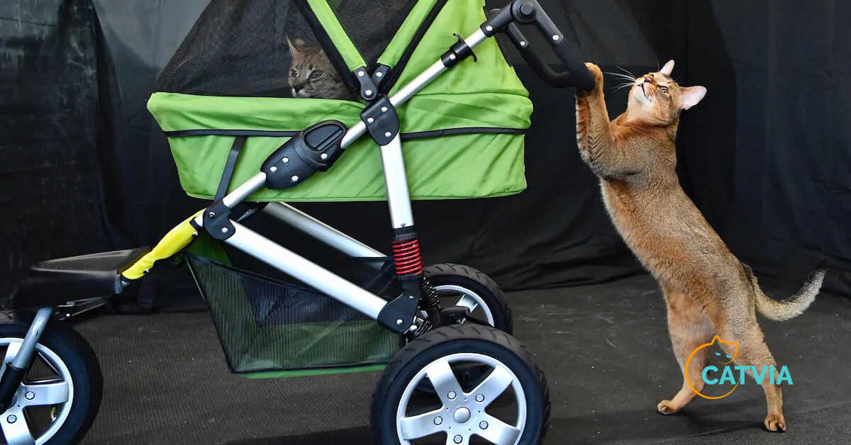 Best Cat Strollers review and buying guide