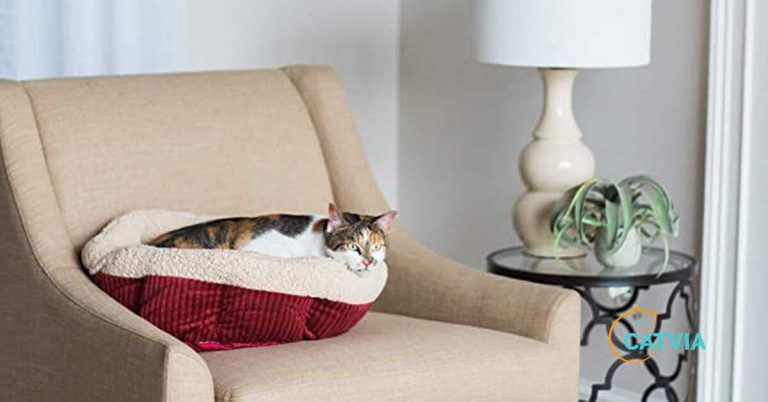 Best Cat Beds Review & Buyer's Guide