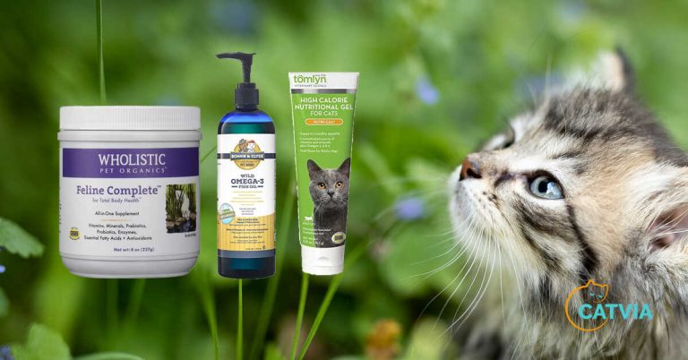 Best-Vitamin-supplement-for-cats