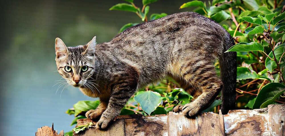 train an outdoor cat to stay home to become a mouser